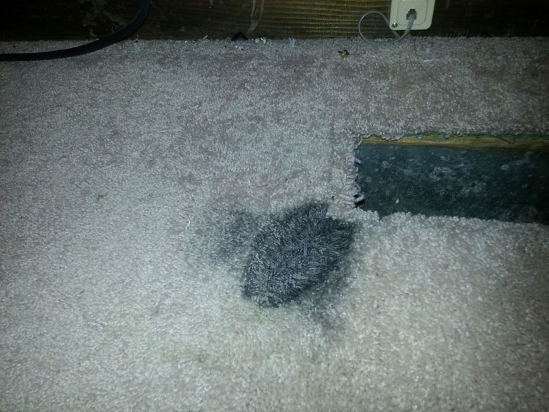 Cleaning Gallery Atlanta Carpet Cleaning Carpet Repairs
