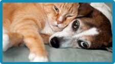 Pet Odor Care & Cleaning